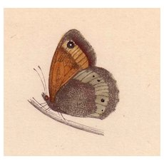 Lovely Hand-Colored Engraving Butterfly LARGE MEADOW BROWN, Morris