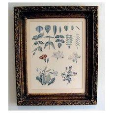 Lovely Framed Botanical Print, Flowers, Violas