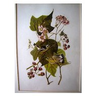 Lovely Framed Audubon Print, Black & Yellow Warbler