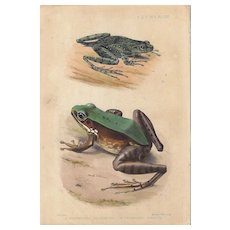 1875 Hand-Colored Lithograph of Frogs, G. H. Ford, Mintern Bros.