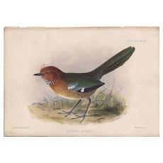 1875 Hand-Finished Color Lithographs John G. Keulemans, PZS