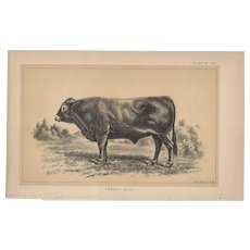 Bi-Color Lithograph c. 1888 Julius Bien FRENCH BULL