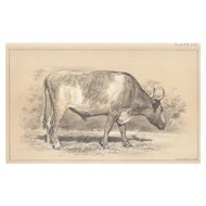 Bi-Color Lithograph GRAY OX Julius Bien 1888