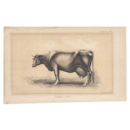 Bi-Color Lithograph FLEMISH COW c. 1888 Julius Bien