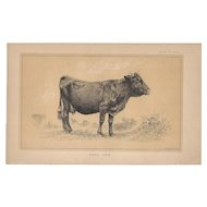 Bi-Color Lithograph C. 1888 Julius Bien HARZ COW