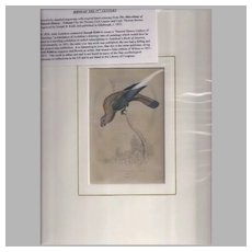 Rare 1833 Hand-Colored Engraving by Joseph B. Kidd, Parrot, CREAM LORY