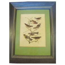 Decorative Framed & Matted Print, Group of Birds