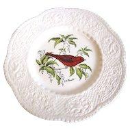 """Royal Cauldon 9"""" Bird Plate, SUMMER TANAGER, Pausch"""