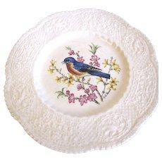 "Lovely Royal Cauldon 9"" Bird Plate, EASTERN BLUEBIRD"