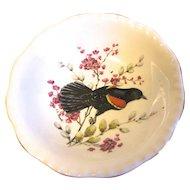 Small Dish (Bowl) Royal Cauldon England RED-WINGED Blackbird