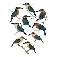 George F Sandstrom Watercolor Bird Study Illustration Halcyon