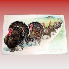 Tuck: Thanksgiving Day Postcard (Turkeys Leaving The Farm)