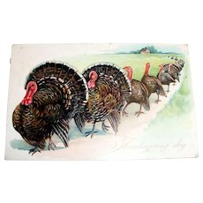 Tuck: Thanksgiving Day Postcard (Turkeys Leaving The Farm)