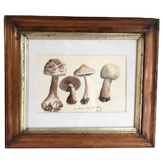 Antique watercolour study of fungi dated 21 May 1859 by HCS