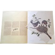 Wildlife Artist Ray Harms Limited Edition Print Robins, signed