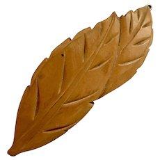 Large Bakelite Barrett, Carved Leaf, 1940's