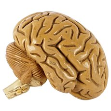 School Model of Brain, 1930´s