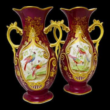 Pair of Samuel Alcock Antique Birds of Paradise Vases, c 1840, handpainted