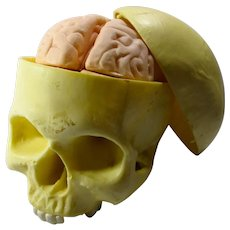 Vintage Anatomical Human Skull Model With Removable Brain