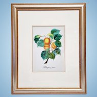 An original painting on porcelain plaque of peaches fruits on branch. FREE US SHIPPING