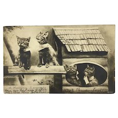 Antique Postcard with four adorable kittens
