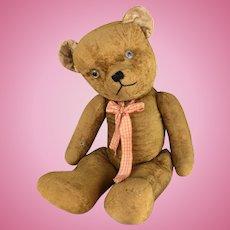 Teddy bear, large, short velveteen gold fur