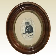 Mahogany Oval Frame With 19th Century print of Macacus Silenus Wanderoo Monkey Plate #14