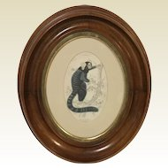 Mahogany Oval Frame With 19th Century print of Hapales Jacchus Striated Monkey