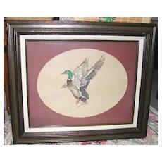 """Mallard Duck in Flight"" by Suzy Stewart"