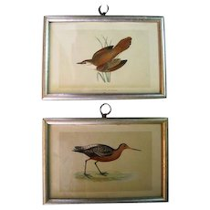 Pair of Original Old Prints - A History of British Birds By The Rev. F. O. Morris, B. A.