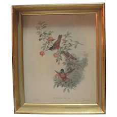 """Helianthea"" Lithograph Framed"