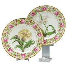Pair Coalport Porcelain Botanical Plates c1800