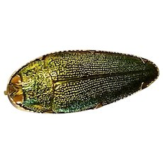 Victorian 15ct gold large scarab beetle brooch, antique Egyptian revival