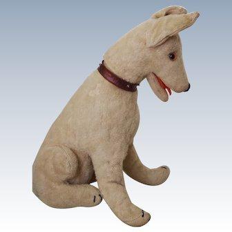 humorous French dog