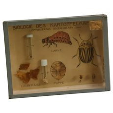 Natural History - Entomology - an mid-20th century Austrian museum didactic diorama