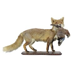 Large Fox with Jay Taxidermy