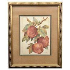 Original Jerianne Van Dijk Watercolor Painting of Autumn Apple Branches