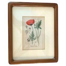 Antique Poppy Flower Hand Colored Botanic Etching Framed Artwork Friedrich Verlag 1876