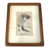 Antique Anemone Flower Hand Colored Etching Framed Artwork Friedrich Verlag 1876