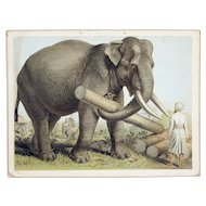 Early 20th century colored print of Indian Elephants