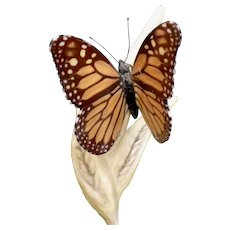 Boehm Monarch Butterfly Porcelain Figurine #40551