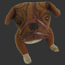 """1906 Bulldog with muzzle by Steiff with blank button 15"""" long"""