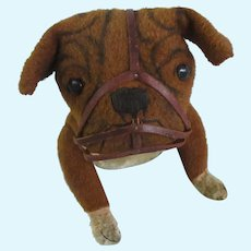 "1906 Bulldog with muzzle by Steiff with blank button 15"" long"