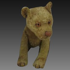 STEIFF : 1910-1920 Young lion with Button