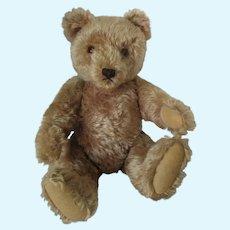 "15 2/3"" STEIFF original Teddy 40 cm bear with button 1950's VGC"