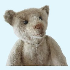 """STEIFF 1910's white teddy bear 30 cm . 11 3/4"""""""