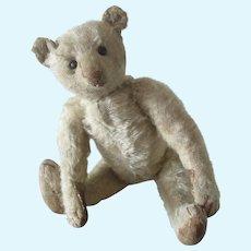 """STEIFF 1910's white teddy bear 35 cm . 13 3/4"""""""