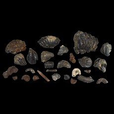 Collection of fossils from Lower Cretaceous Albian 100 million years old Ammonite gastropod etc… GB12
