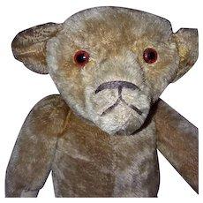 1903 American Teddy Bear