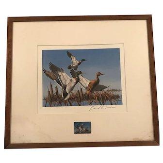 Framed Mallard Signed Print by David Maass with Matching Duck Stamp-Rare